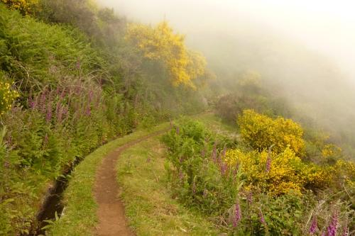 Klima in Madeira