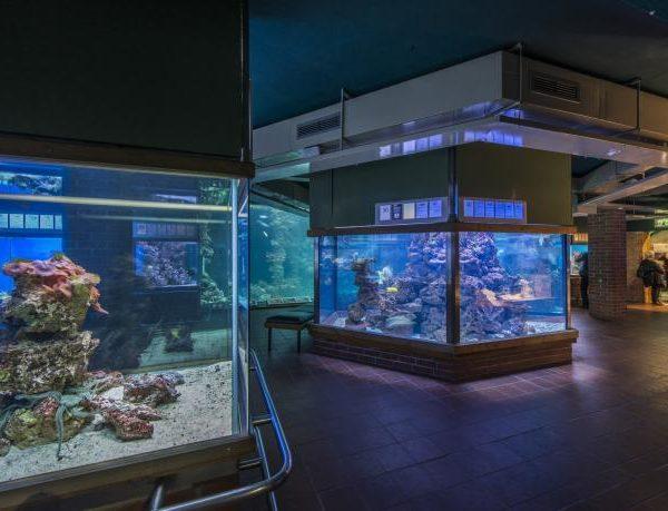 meeresmuseum-stralsund-aquarien