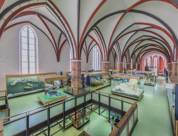 meeresmuseum-stralsund-ausstellungen