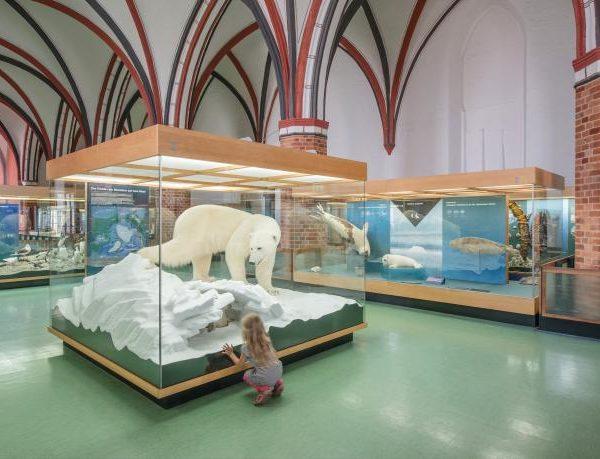 meeresmuseum-stralsund-eisbaer
