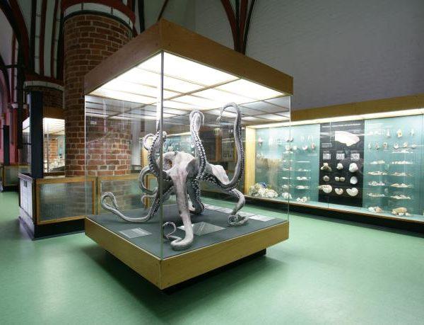 meeresmuseum-stralsund-krakenmodell
