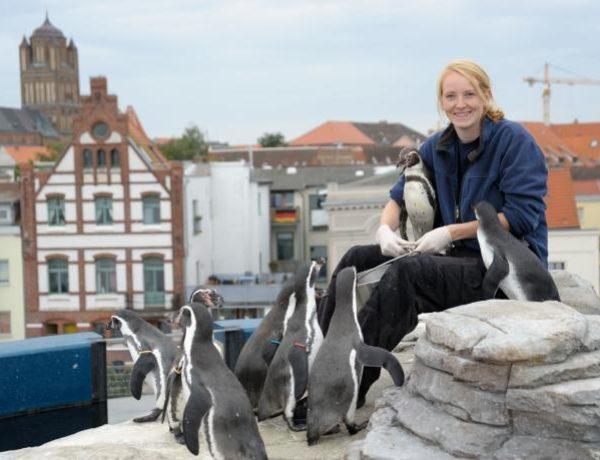 stralsund-ozeanum-pinguine