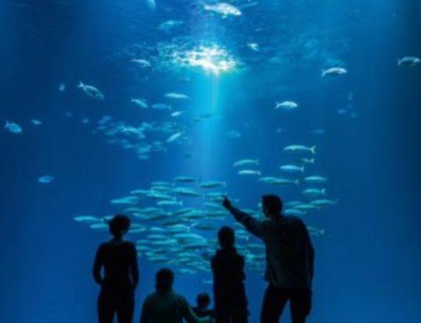 stralsund-ozeanum-schwarmfischbecken