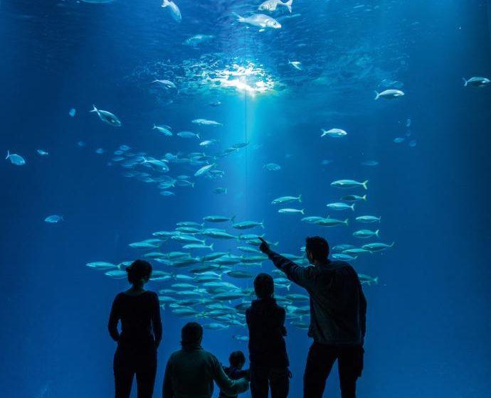 Stralsund Ozeanum größtes Aquarium