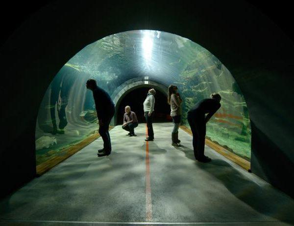 stralsund-ozeanum-tunnelaquarium