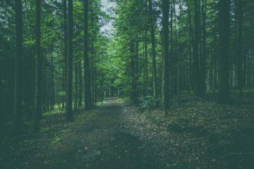 Wanderkarte bayrischer Wald