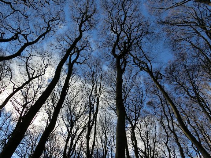 Rügen Bäume