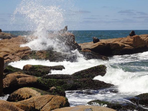 Seelöwen im Nationalpark Cabo Polonio