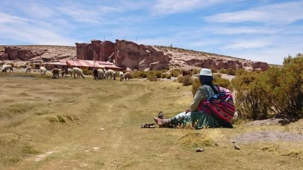Eine Lama Herde und ihre Schäferin in einer grünen Oase der Wüste