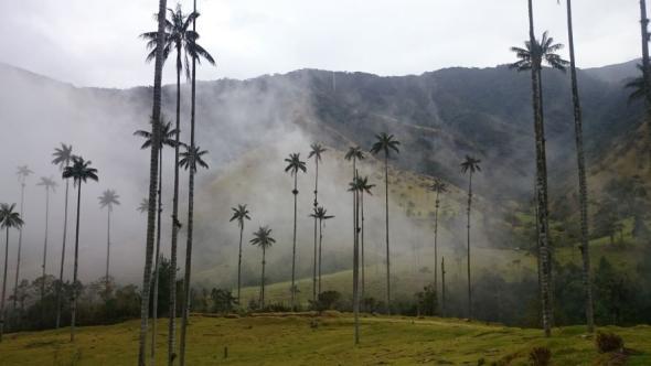 Malerische Landschaft des Valle del Cocora